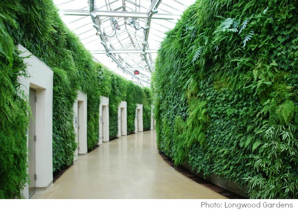 La pared verde en Longwood Gardens Pennsylvania