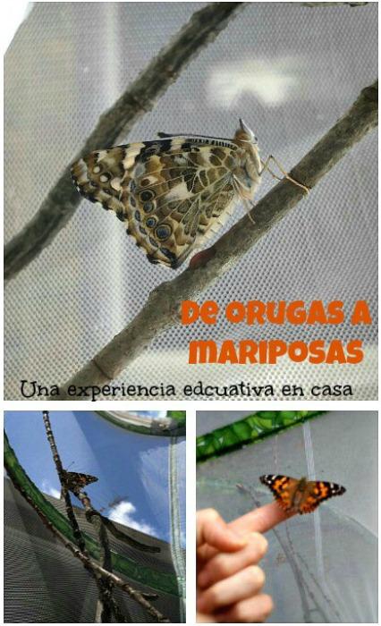 De orugas a mariposas, una experiencia educativa en casa.