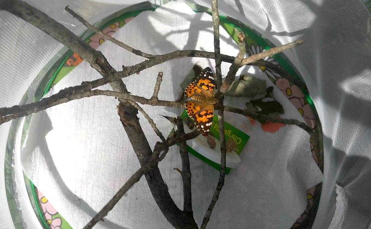 De orugas a hermosas mariposas monarca