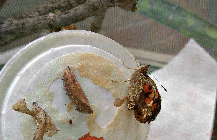 De orugas a mariposas
