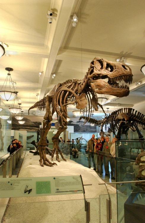 Dinosaurio de la película Una Noche en el Museo