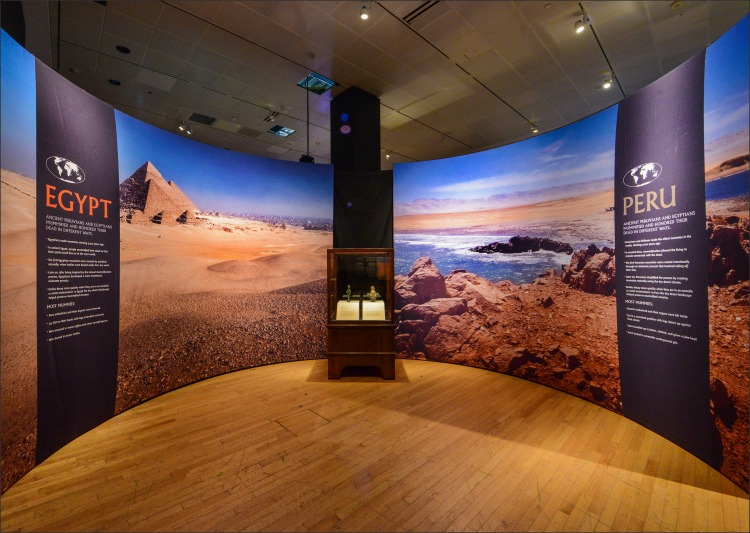 Comparación de las momias de Perú y Egipto en el American Museum of Natural History