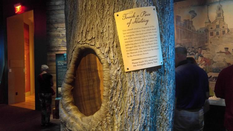 árbol anápolis nacimiento de los estados unidos