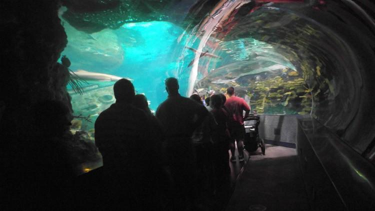 TUnel bajo el agua en el acuario de Ripley's en Gatlinburg, Tennessee