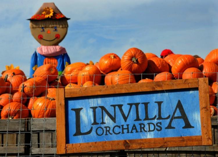 Linvilla Orchards y 8 lugares para disfrutar del otoño cerca a Filadelfia
