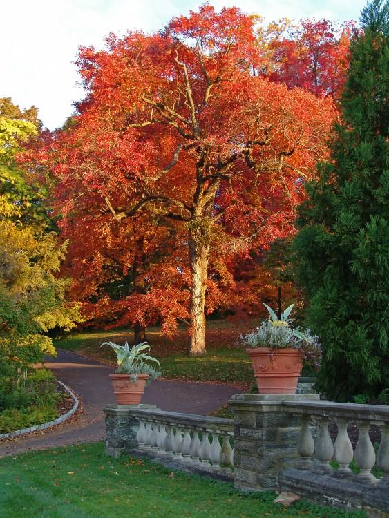 Morris Arboretum y 8 lugares para disfrutar del otoño cerca a Filadelfia