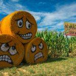 Atracciones de otoño Shady Brook Farm