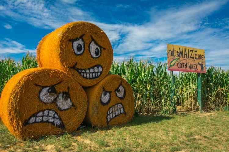 Shady Brook Farm y 8 lugares para disfrutar del otoño cerca a Filadelfia