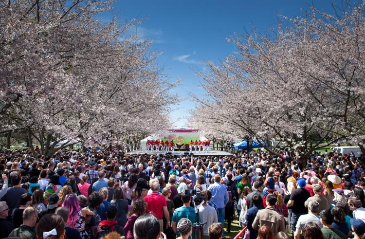 Subaru Cherry Blossom en Philadelphia
