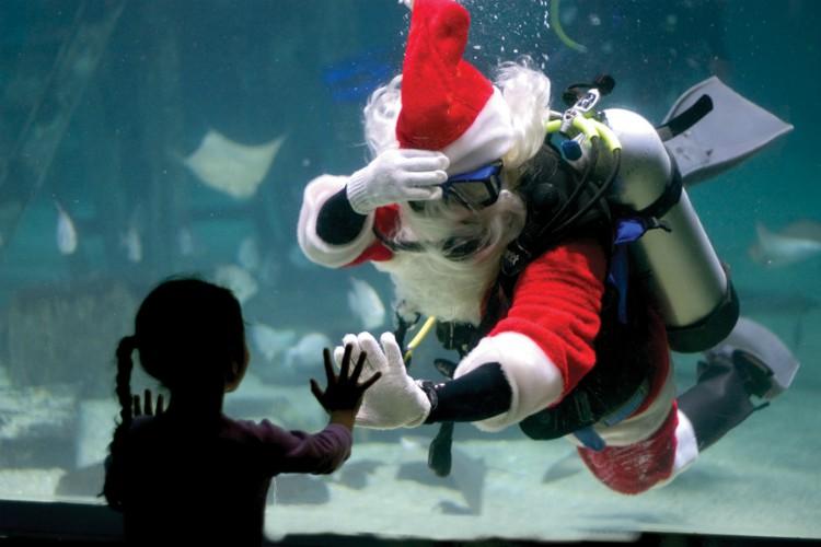 Navidad bajo el agua en el Adventure Aquarium